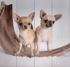Chihuahua op hout